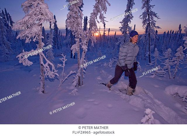 Woman exploring boreal forest on snowshoes before sunrise, Dempster Highway, Yukon