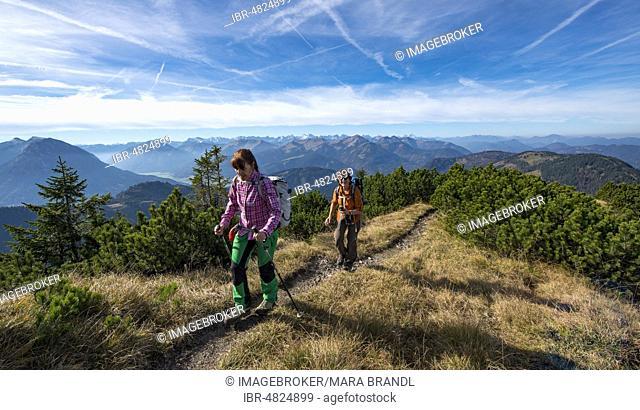 Hikers crossing the Blauberge mountains, crossing from Predigtstuhl via Blaubergschneid, Blaubergkopf and Karschneid to Halserspitz, Wildbad Kreuth