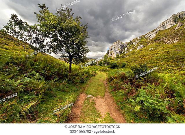 The Arredondas road in Brez  Cordillera Cantábrica  Santander  Cantabria  Spain