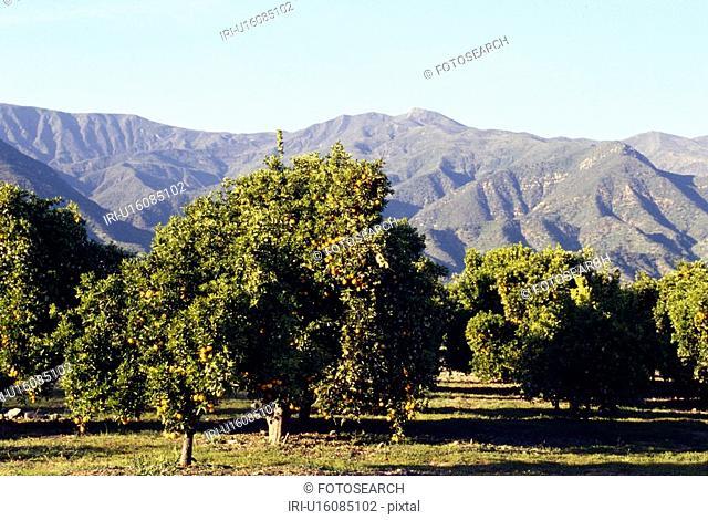 california, agriculture, California, bernd, america, anbau