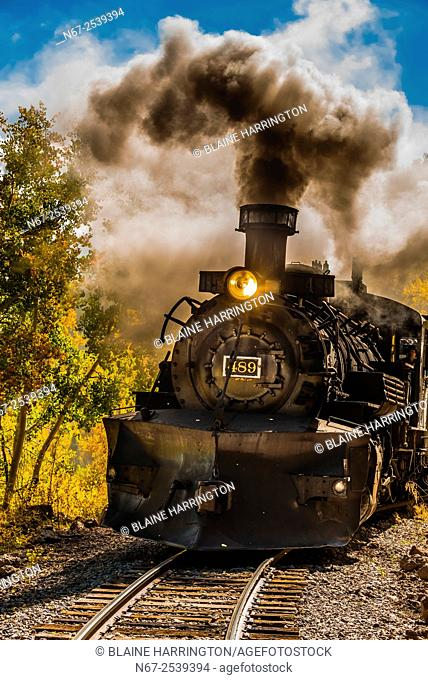 The Cumbres & Toltec Scenic Railroad train pulled by a steam locomotive passes through groves of aspen trees in peak autumn color on the 64 mile run between...