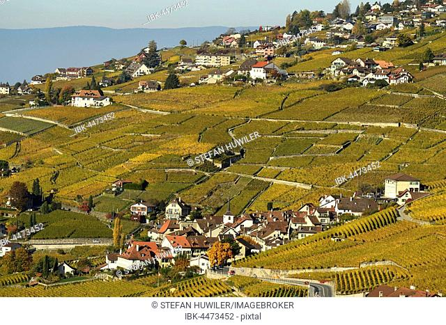Vineyards in autumn with view of the wine-producing village Riex, Lavaux, Canton of Vaud, Switzerland