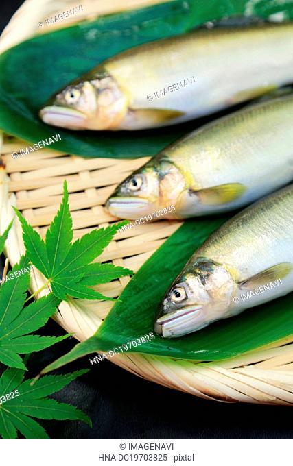 Ayu(Sweet fish)