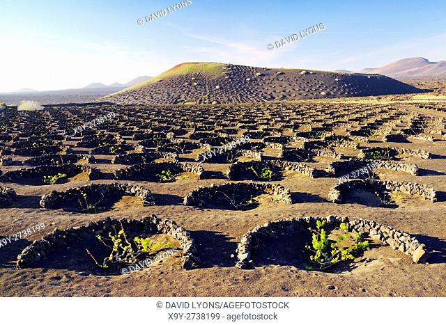 Lanzarote, Canary Islands. Traditional cinder rock wind shelter walls protect grape vines in volcanic landscape around La Geria