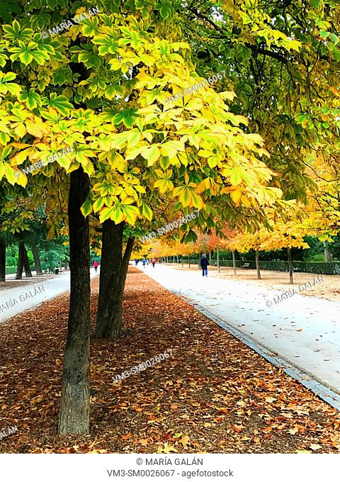 Autumn in The Retiro park. Madrid, Spain