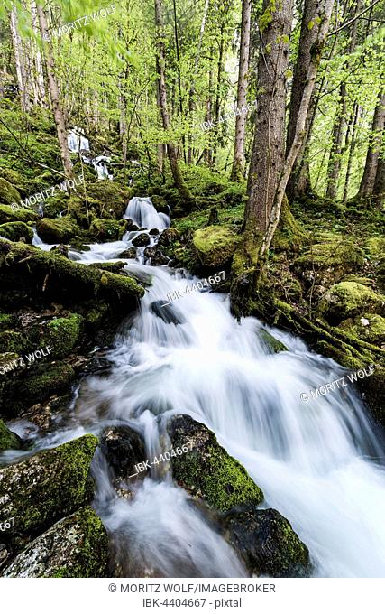 Stream running through forest, Röthbach, Röthbachfall, Schönau am Koenigssee, Berchtesgaden, Bavaria, Upper Bavaria, Germany