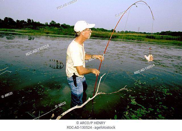 Man hunting alligators Texas USA preparing bait