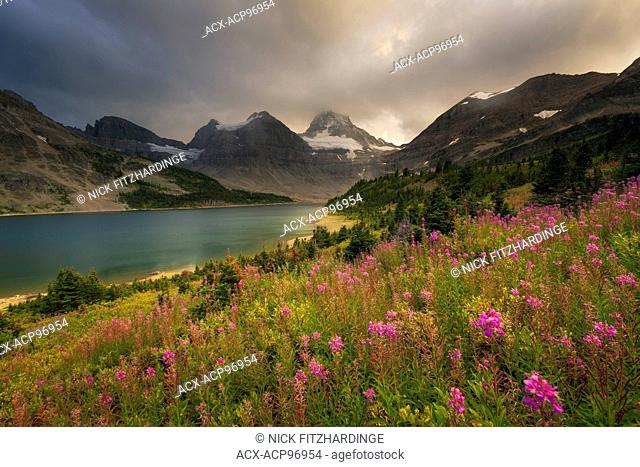 A passing storm over a patch of fireweed, Chamerion angustifolium, in Mt Assiniboine Provincial Park, British Columbia, Canada