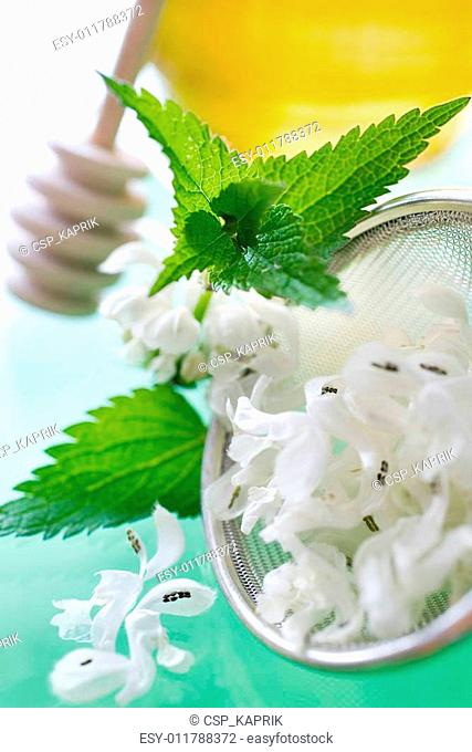 White Dead-nettle - Lamium album - tea lotion made of white flo