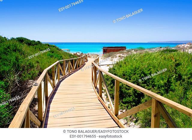 Formentera migjorn Els Arenals beach walkway of wood in Spain