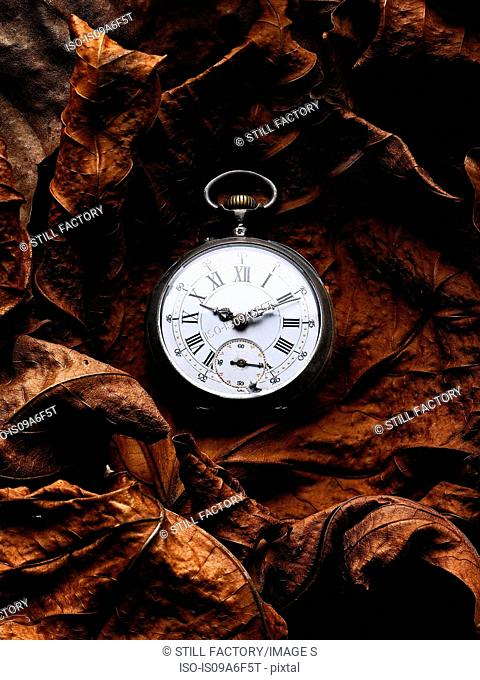 Pocket watch on autumn leaves