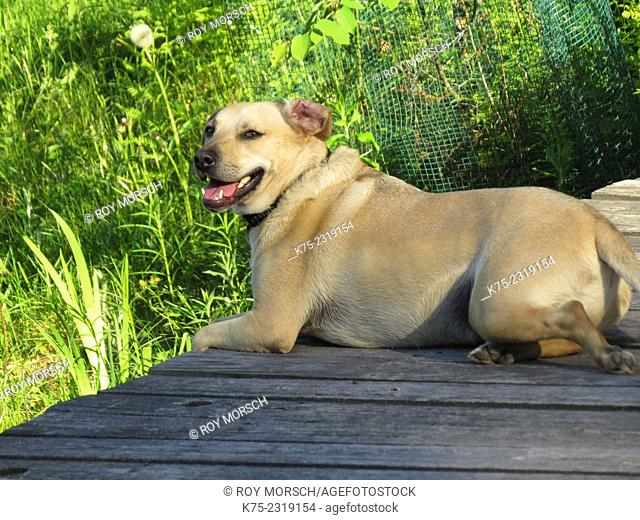 Pet dog sitting on dock smiling