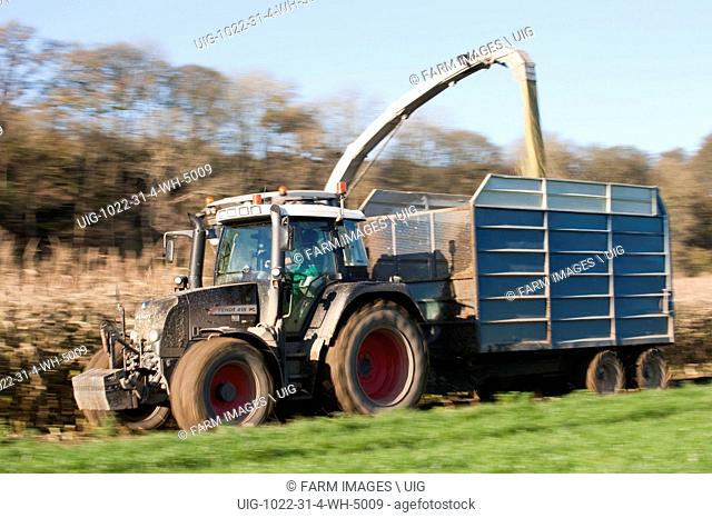 Harvesting Maize silage using a Claas 970 self propelled forage harvester. (Photo by: Wayne Hutchinson/Farm Images/UIG)