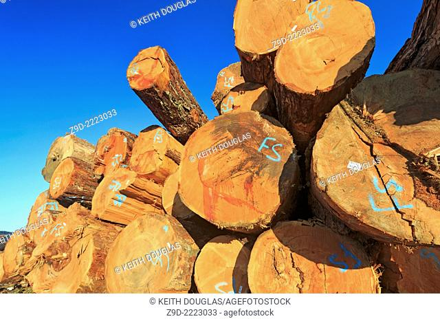 Large sized old growth logs in log sorting yard, Nanaimo, British Columbia