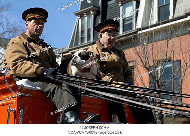 Boston Beer wagon and English Bull Dog, St. Patrick's Day Parade, 2014, South Boston, Massachusetts, USA