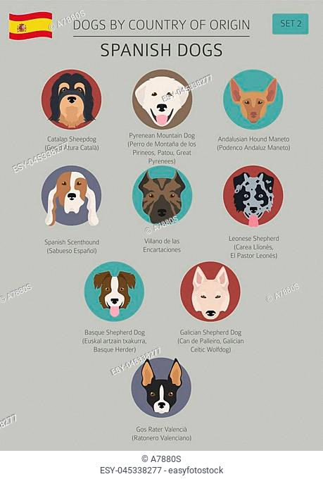 Dogs by country of origin. Spanish dog breeds. Infographic template. Vector illustration