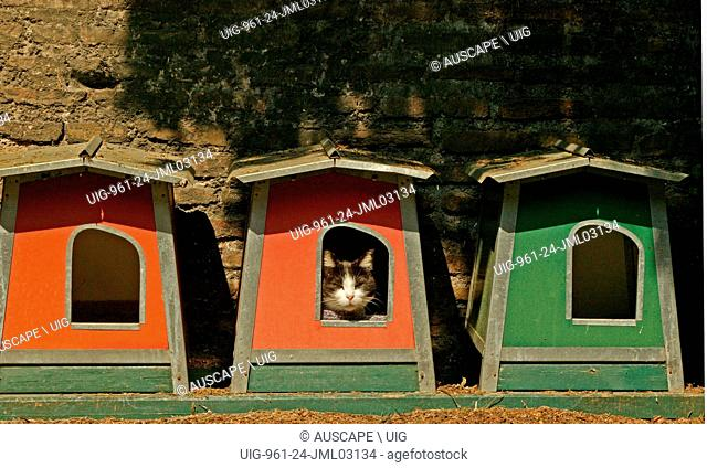Domestic cat, Felis catus, resting in outdoor kennel. (Photo by: Auscape/UIG)