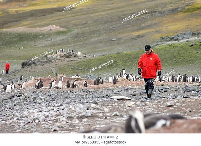 Antarctica, South Shetlands Islands, Aitcho Island, Tourist at Penguin colony. MR