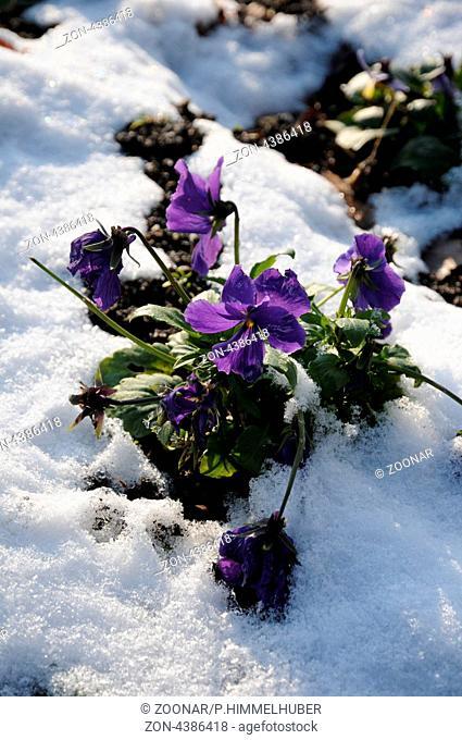 blühende Pflanze im Winter