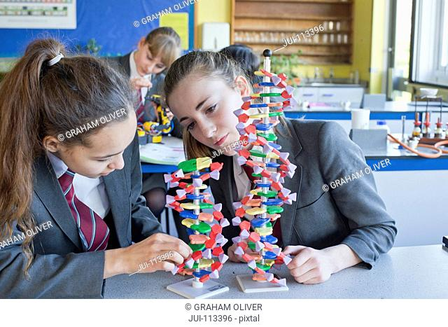 High school students assembling helix DNA model in science class
