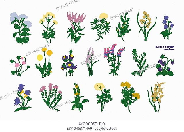 Collection of detailed drawings of different botanical flowers and decorative flowering plants isolated on white background