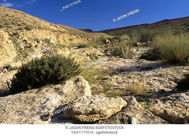 TUNISIA, Chebika Region, Tamerza  Vegetation and rocks in the harsh mountain landscape surrounding the town