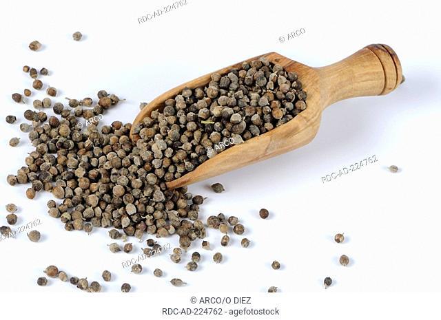 Mediterranean Chaste Tree, Vitex agnus-castus, Chasteberry, Monk's Pepper