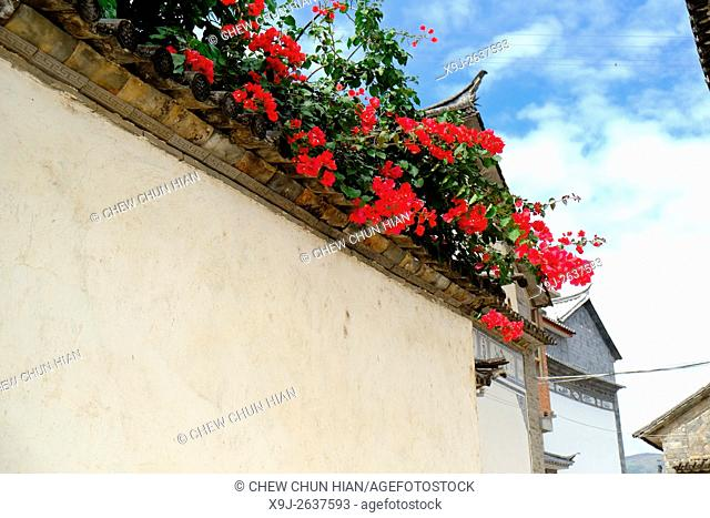 Blossoming flowers on residence walls of Bai ethnic group in Dali, Yunnan Province, China
