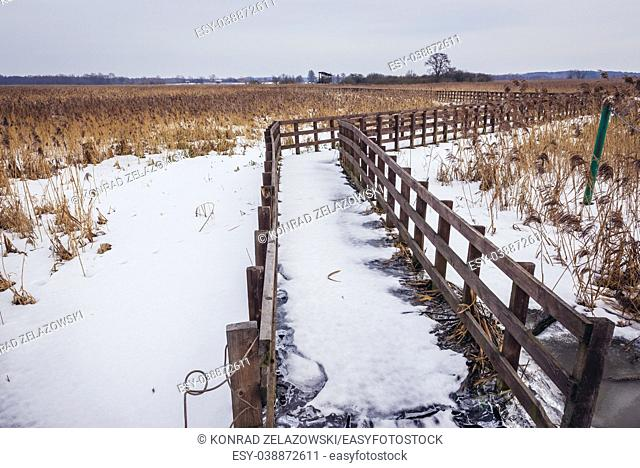 Wooden footbridge over braided channels of Narew River in Waniewo village, part of Narew National Park in Podlaskie Voivodeship of Poland