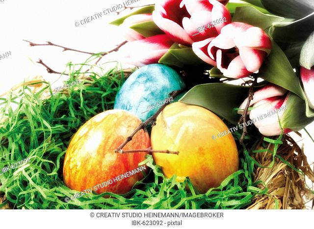 Easter nest with colourful eggs and tulips