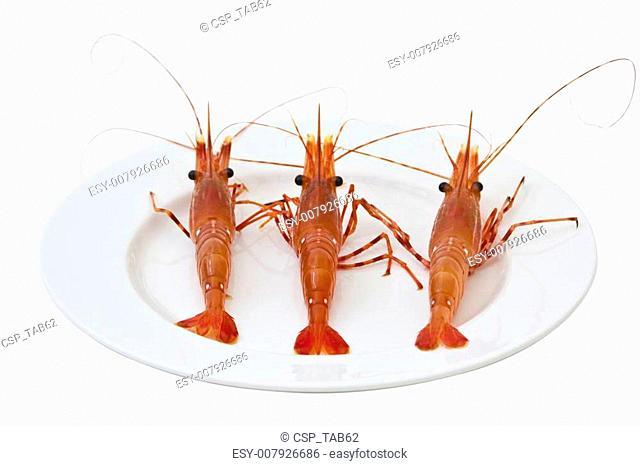 Lively Shrimp