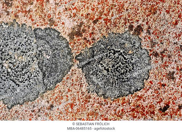 Lichens on a volcanic stone in New Zealand. Discovered during a trekking tour by the Tongariro national park