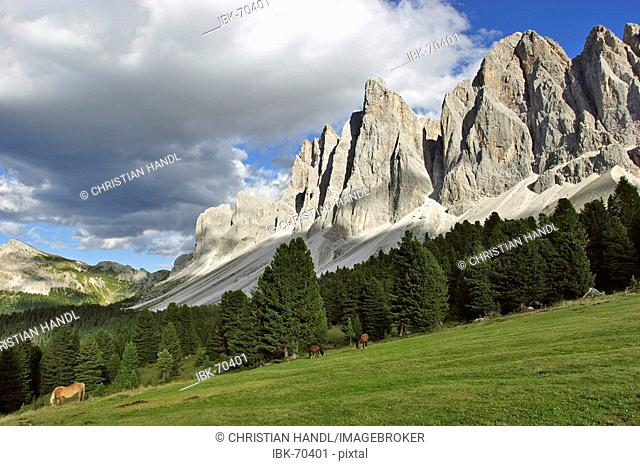 Horses on the new Gschnagenhardt alp behind the Geilser mountain range South Tyrol Italy