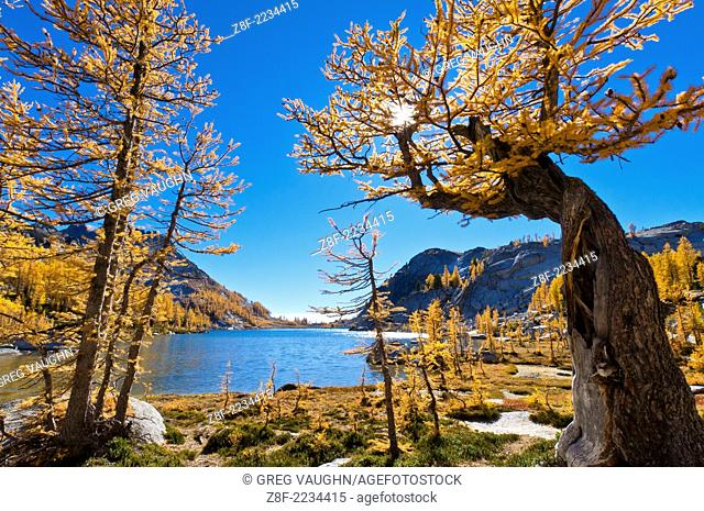 Alpine larch trees and Perfection Lake in The Enchantments, Alpine Lakes Wilderness, Washington