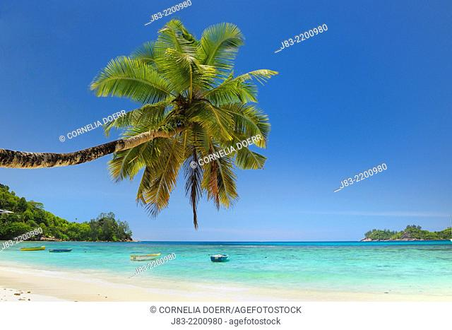 Fishing boats and palm tree at tropical beach, Baie Lazare, Mahe, Seychelles, Indian Ocean