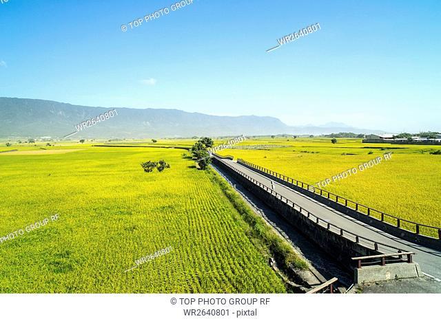 Taitung chishang rice
