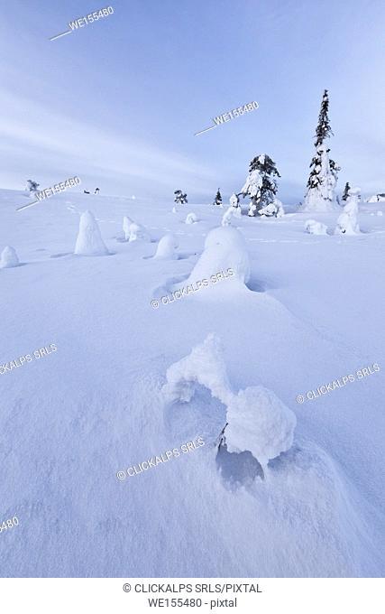Sun and blue sky frame the the frozen trees in the snowy woods Ruka Kuusamo Ostrobothnia region Lapland Finland Europe