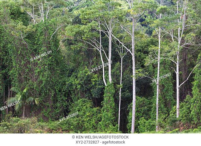 Semi tropical rain forest inland from the Gold Coast, Queensland, Australia