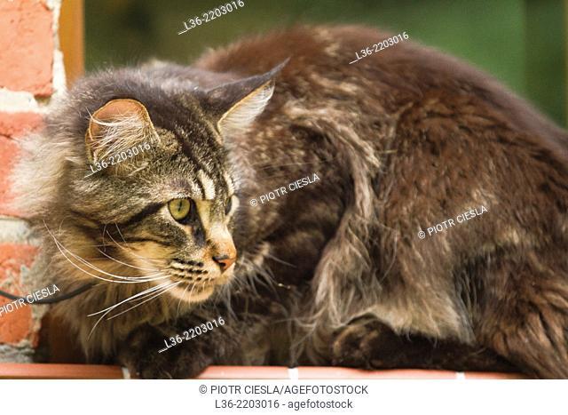 Portrait of a cat