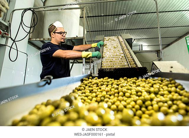 Worker in food processing plant at conveyor belt with olives