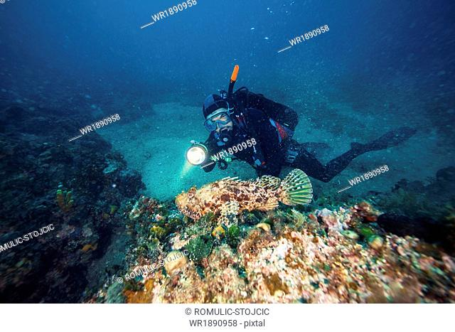 Diver exploring coral reef, Adriatic Sea, Dalmatia, Croatia