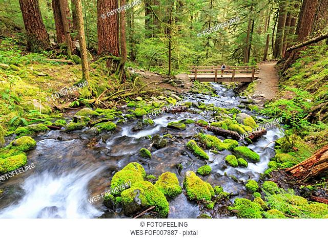 USA, Washington State, Olympic National Park, View of sol duc river, Cascade, Wooden bridge