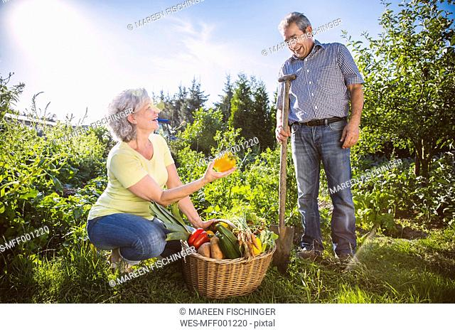 Germany, Northrhine Westphalia, Bornheim, Senior couple with vegetable basket in garden