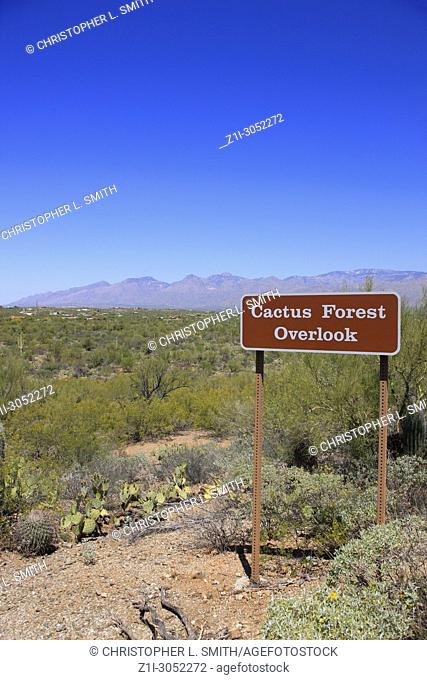 Cactus Forest Overlook in the Saguaro East Rincon Mountain National Park in Tucson, Arizona
