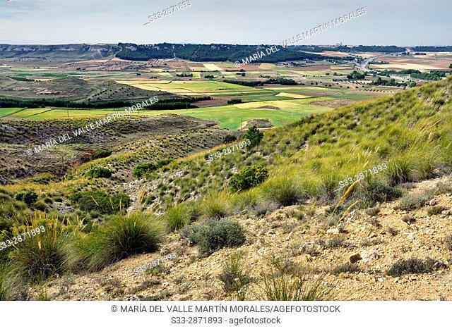 Country in La Guardia. Toledo. Castilla la Mancha. Spain. Europe