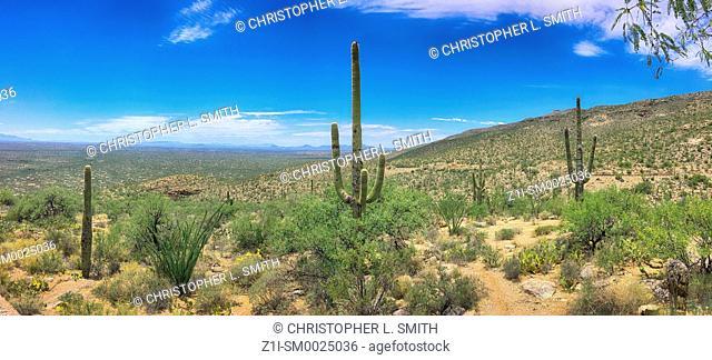 Panoramic view of the scenery in the Coronado National Park near Tucson, Arizona