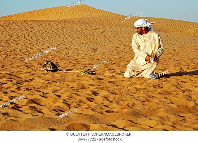Arab Falconer with Gyrfalcon which has caught fake prey, in the desert, falcon training in Dubai, United Arab Emirates