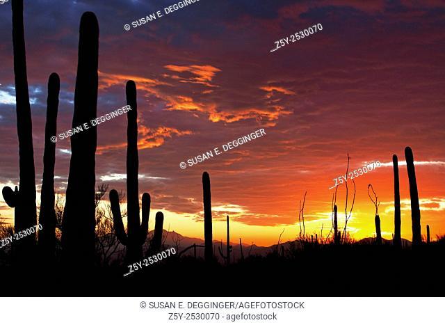 Colorful sunset in the Sonoran Desert, Saguaro West National Park, Tucson, Arizona
