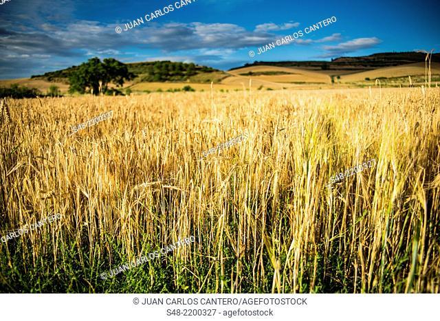 Fields. Santurdejo. La Rioja. Spain. Europe