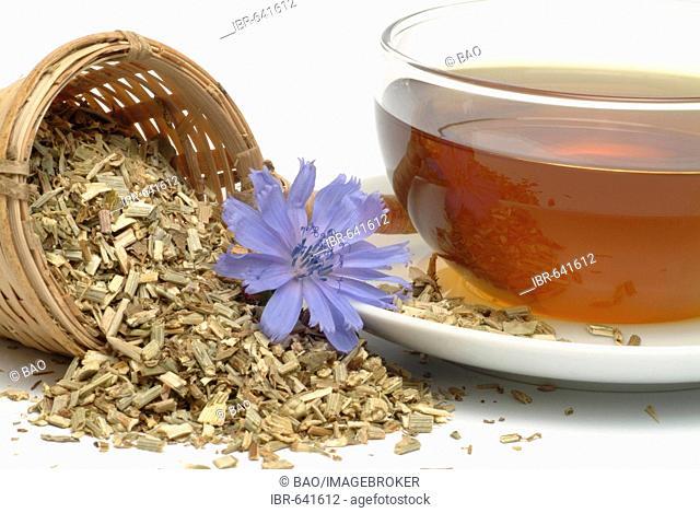 Common Chicory (Cichorium intybus), herbal tea